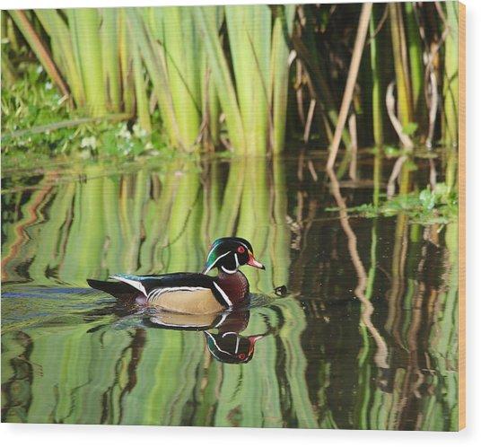 Wood Duck Reflection 1 Wood Print