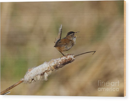 Wren Strong Song Wood Print