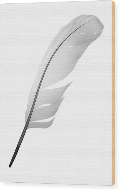 X-ray Of Feather Wood Print by Nick Veasey