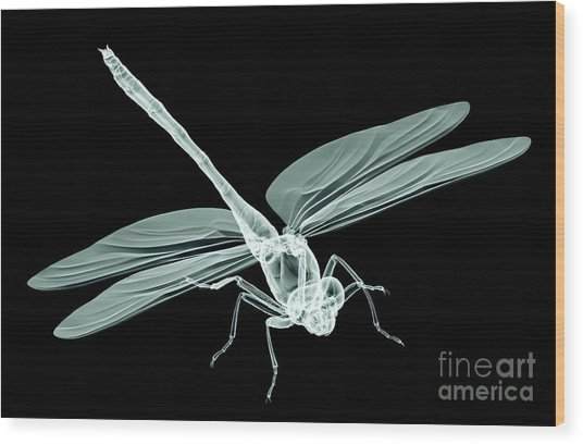 Xray Image Of An Insect Isolated On Wood Print