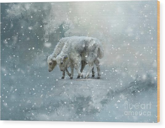 Yaks Calves In A Snowstorm Wood Print
