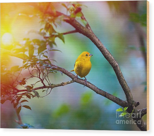 Yellow Bird Sitting On A Branch Wood Print