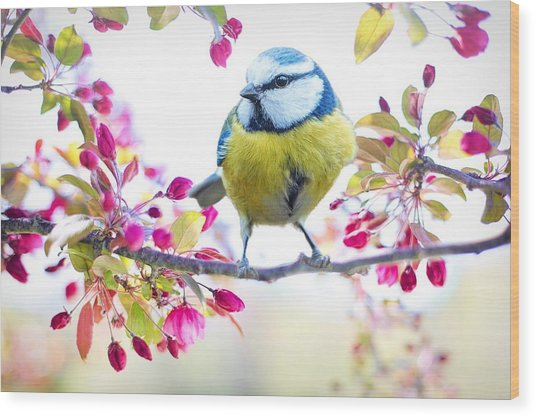 Yellow Blue Bird With Flowers Wood Print