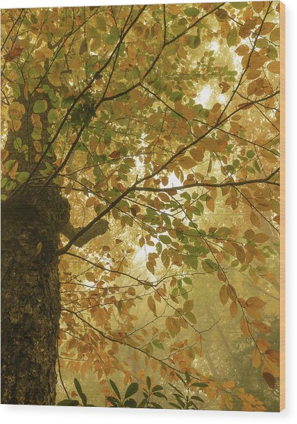 Yellow Fall Leaves - Blue Ridge Parkway Wood Print