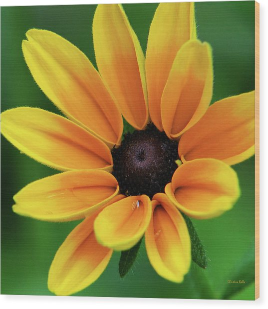 Yellow Flower Black Eyed Susan Wood Print