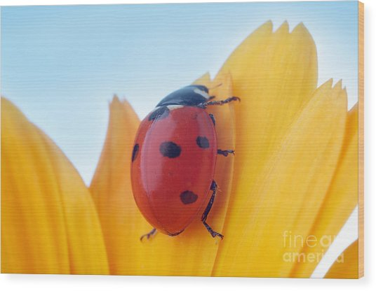 Yellow Flower Petal With Ladybug Under Wood Print