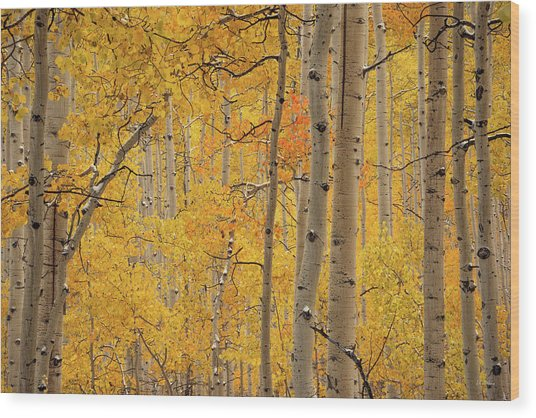 Yellow Forest Wood Print by Leland D Howard