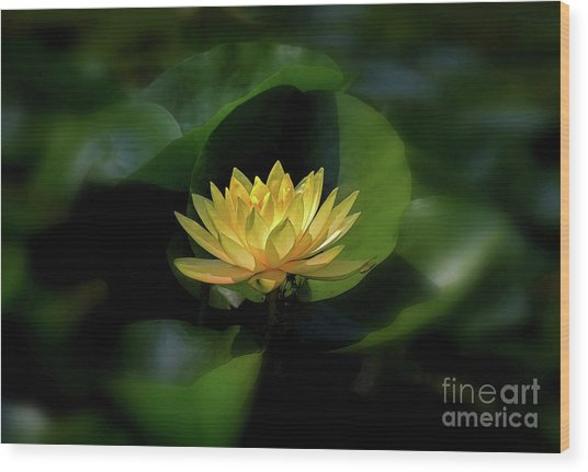 Wood Print featuring the photograph Yellow Lotus by Patti Whitten