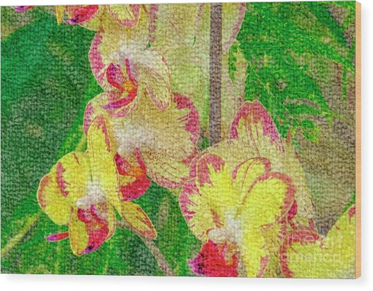 Yellow/rouge Orchids Wood Print