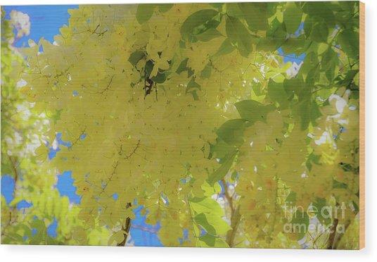 Yellow Shower Tree Flowers - Hawaii Wood Print by D Davila
