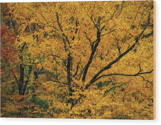 Yellow Tree Leaf Brilliance  Wood Print