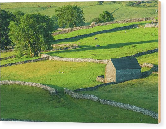 Yorkshire Dales Near Malham Wood Print by David Ross