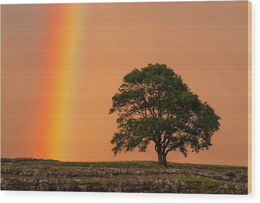 Yorkshire Dales Rainbow Wood Print by David Ross