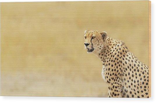 Young Adult Cheetah Banner Wood Print