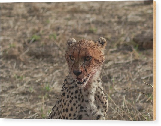 Young Cheetah Wood Print
