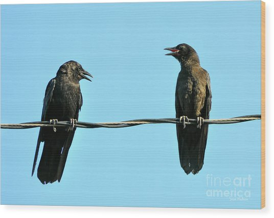 Young Crow Chatting With Mom Wood Print