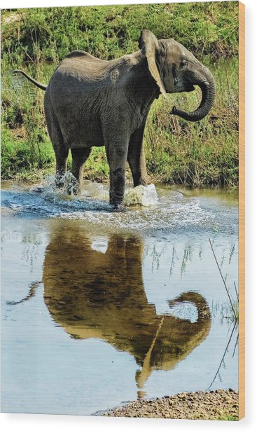Young Elephant Playing In A Puddle Wood Print