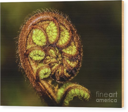 Young Fern Leaves Wood Print