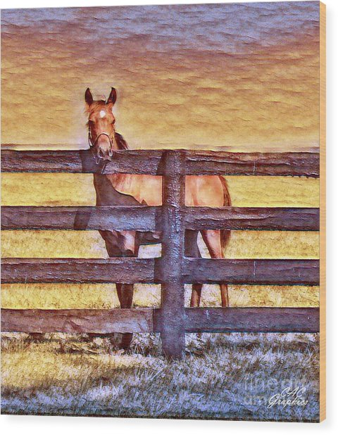 Young Kentucky Thoroughbred Wood Print