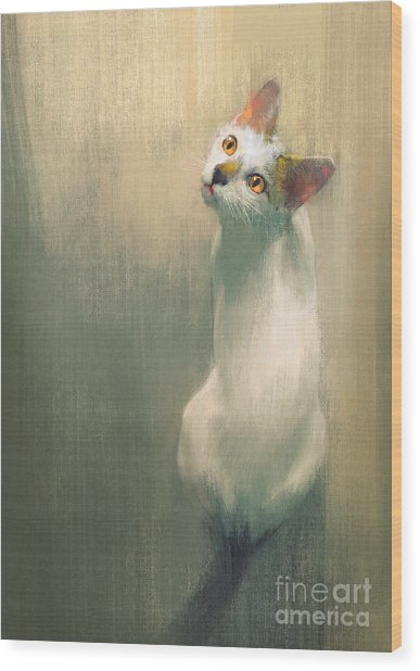 Young White Cat Looking Up,digital Wood Print