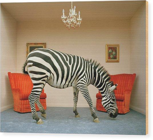 Zebra In Living Room Smelling Rug, Side