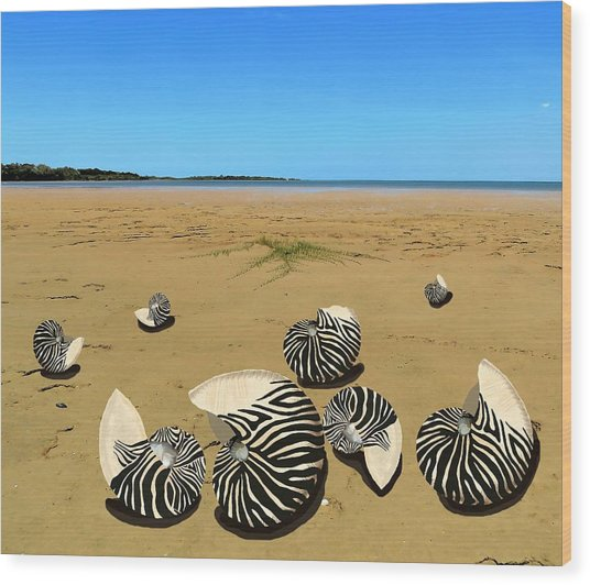 Zebra Nautilus Shells On The Beach  Wood Print