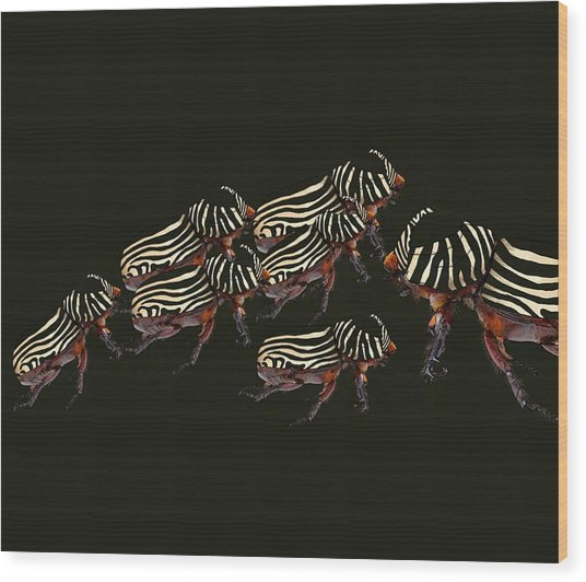Zebra Pattern Rhinoceros Beetle 3 Wood Print