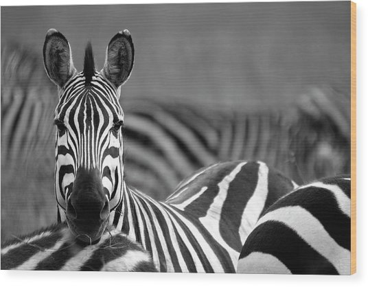 Zebra Wood Print by Wldavies