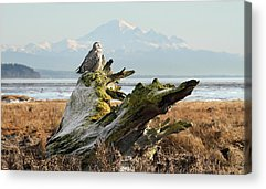 Rare Bird Of Canada Acrylic Prints