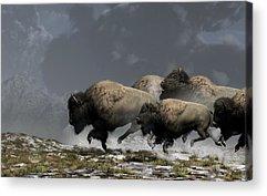 Bison Digital Art Acrylic Prints