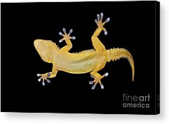 Zoology Acrylic Prints