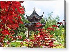 Red Maple Trees Acrylic Prints
