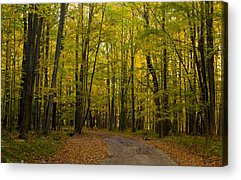 Manistee National Forest Acrylic Prints