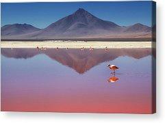 Water Birds Acrylic Prints