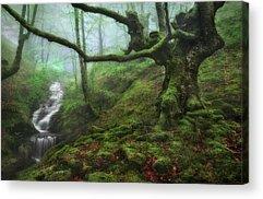 Moss Acrylic Prints