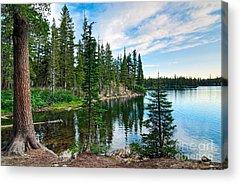 Pine Reflections Acrylic Prints