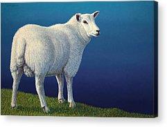 Domesticated Animals Acrylic Prints