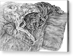 Rescued Greyhound Drawings Acrylic Prints