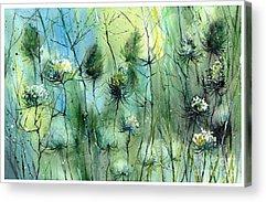 Dazzle Acrylic Prints