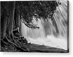 Rooted In Spring Cedar Trees Roots Spring Melt Gooseberry Falls Waterfall Acrylic Prints