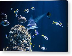 Deep Sea Acrylic Prints