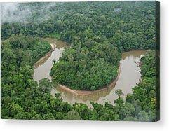 Amazon River Acrylic Prints