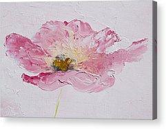 One Single Pink Poppy Flower Acrylic Prints