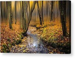 Woodlands Scene Photographs Acrylic Prints