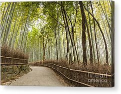 Bamboo Fence Acrylic Prints