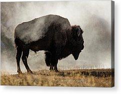 Wyoming Acrylic Prints