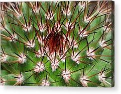 Caryophyllales Acrylic Prints