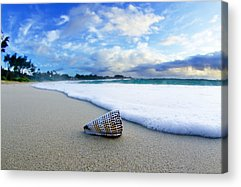 Sea Shell Acrylic Prints