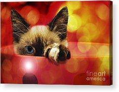 Andee Design Feline Acrylic Prints