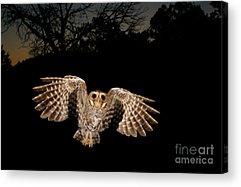 Birds In Flight At Night Acrylic Prints